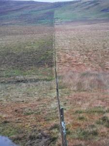 Grazing effects along a fenceline