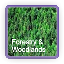 Forestry & Woodland