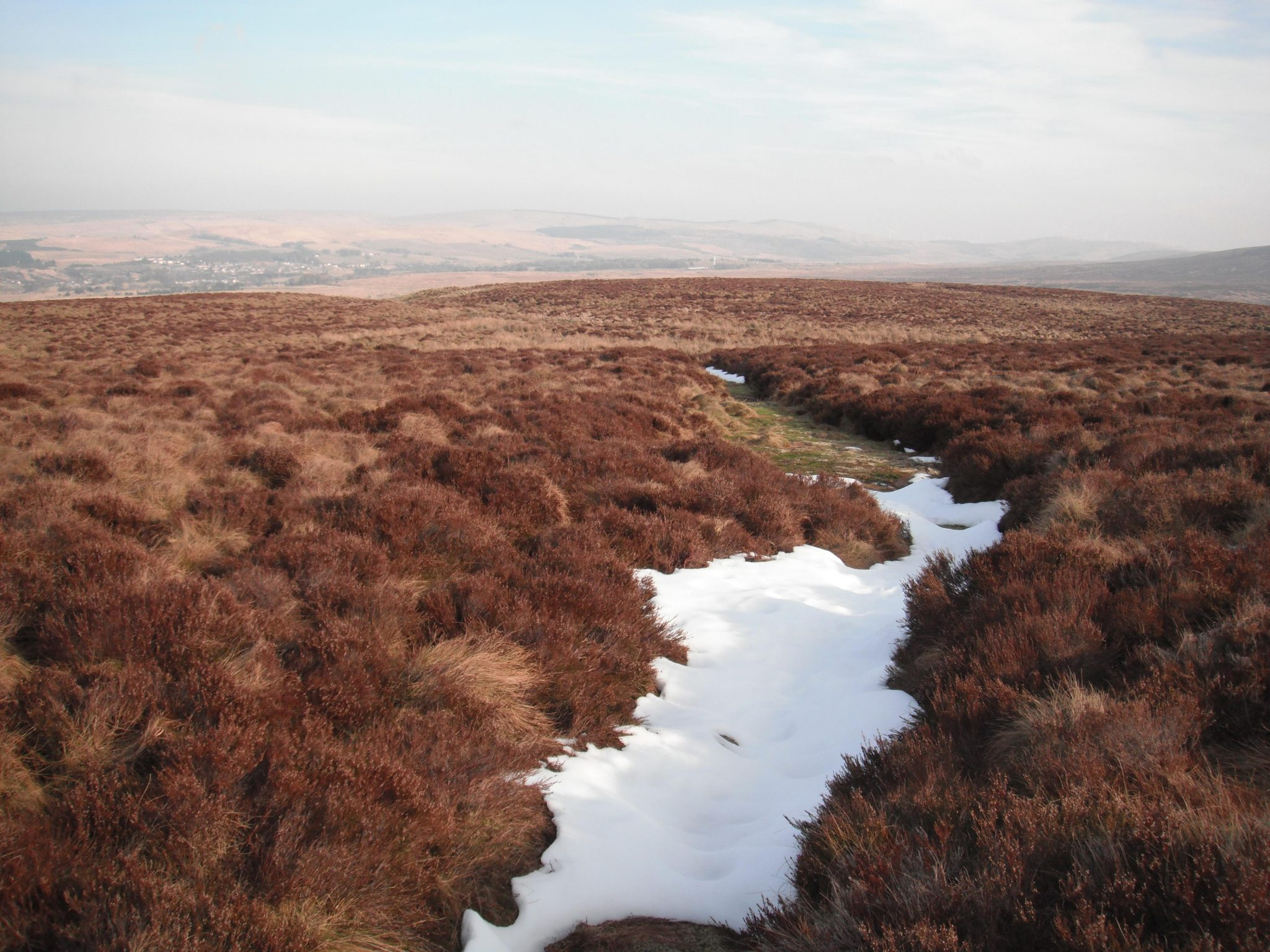 Peatland feasibility studies