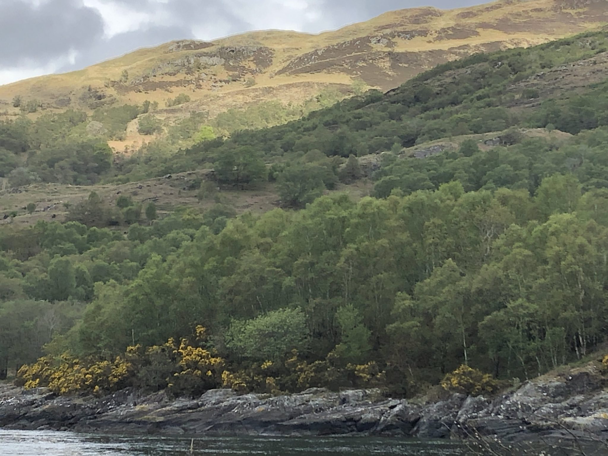 Expansion of native woodlands in Argyll