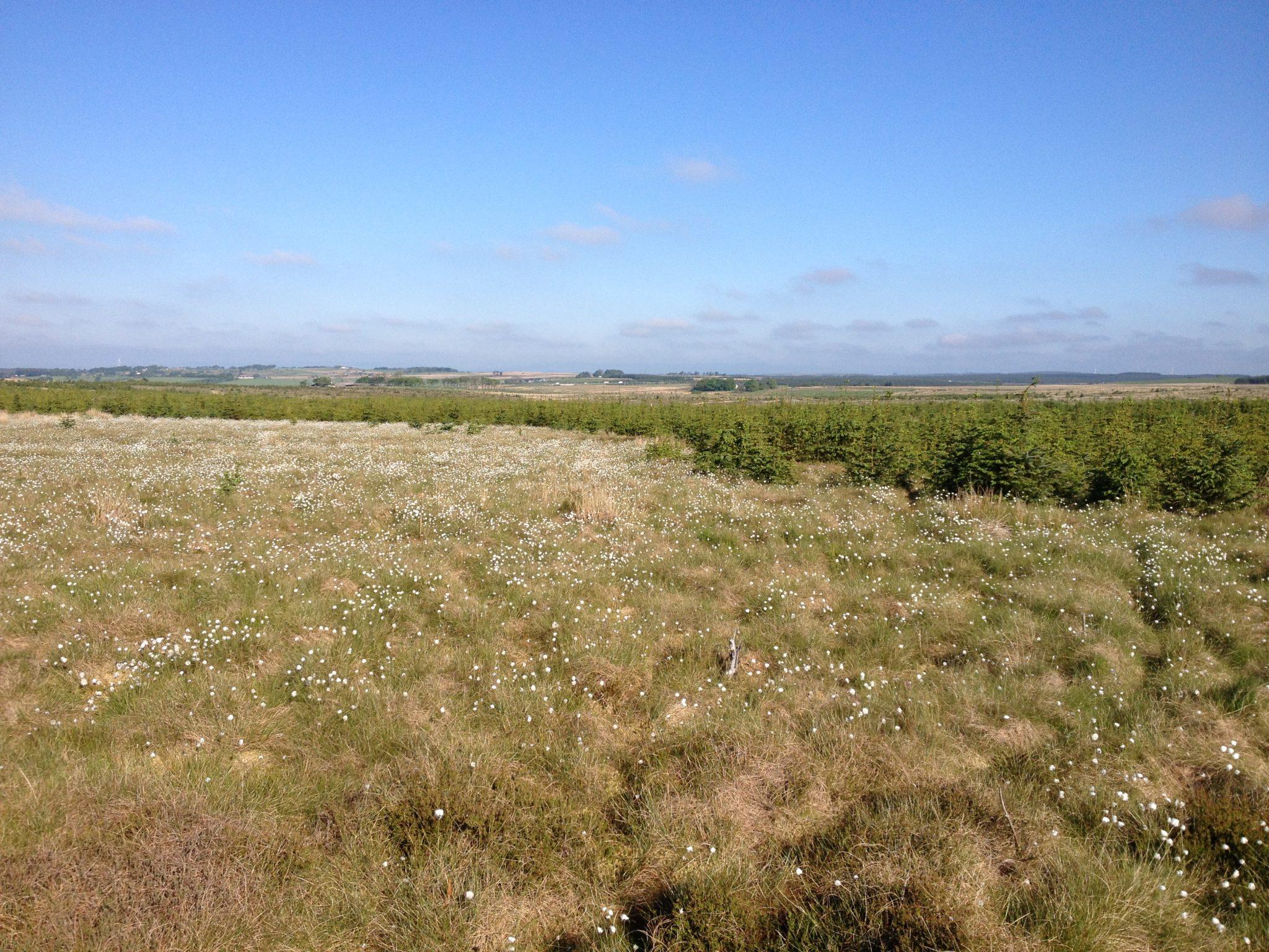 Forest-to-bog trial sites re-visited