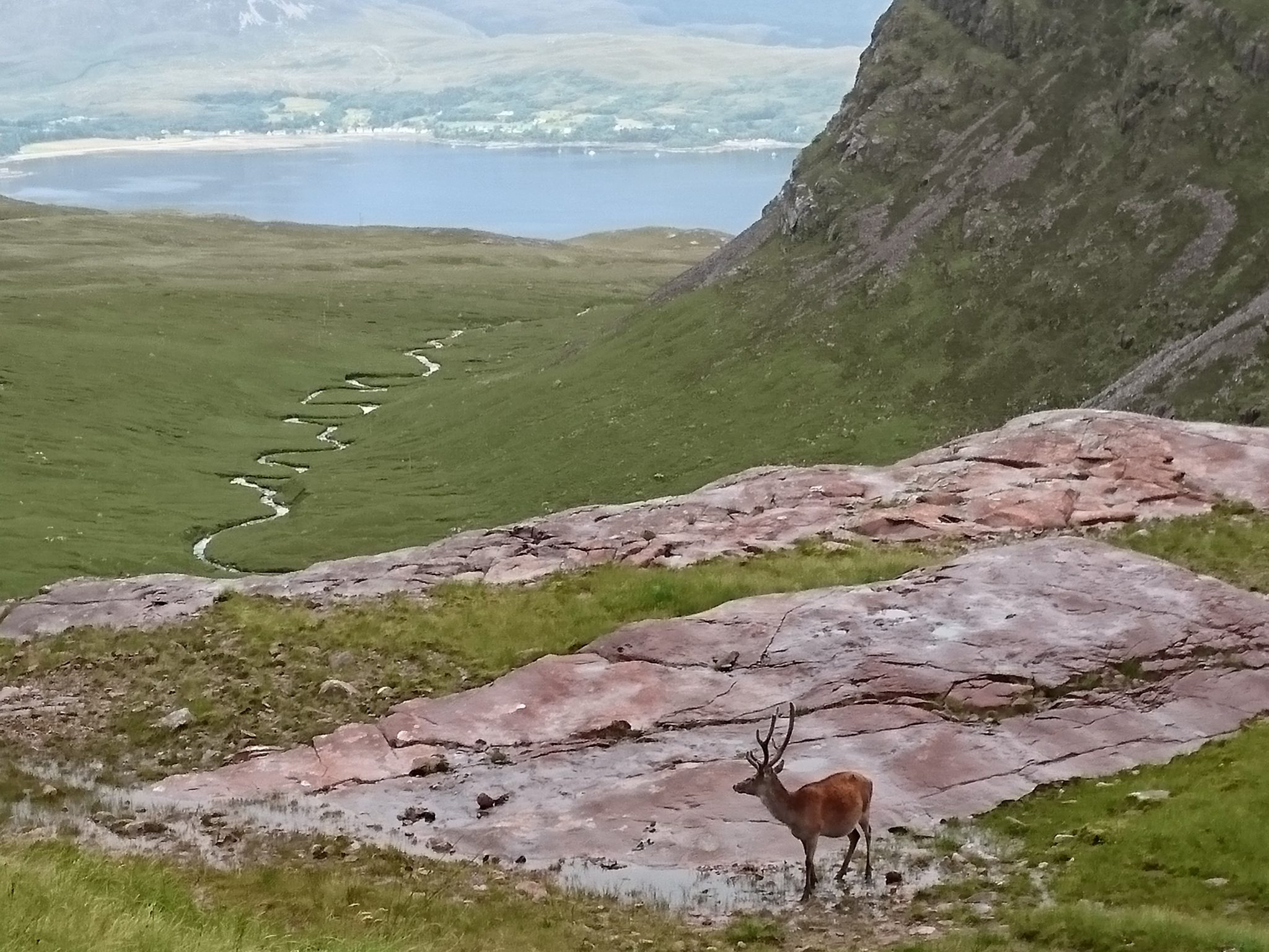 Cairngorms National Park: deer abundance estimation